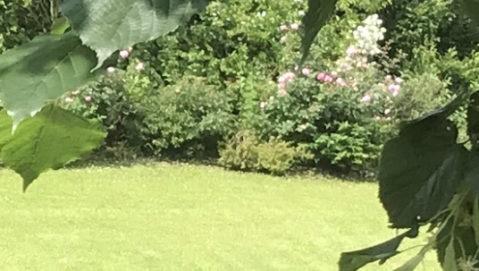 prato con giardino